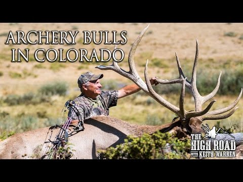 Archery Bulls in Colorado