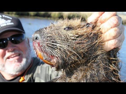 Hunting giant swamp rats in Louisiana with a Ruger 10/22 – and a big stick!