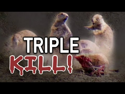 Prairie Dog Hunting Armageddon! (Rifle Hunting)