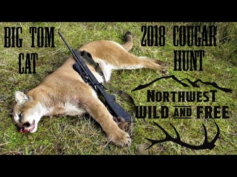 FoxPro Inferno Calls in Cougar – Tracking and Killing a Mountain Lion in the Northwest